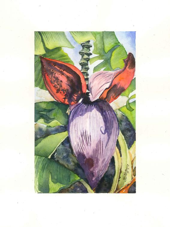 Banana Flower (1)